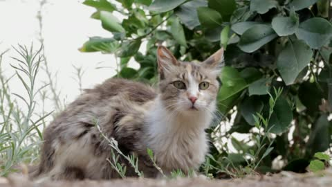 Cute cat beautiful colour you will love it
