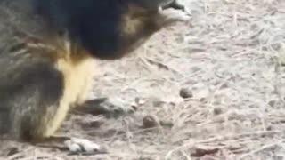 Friendly Fox Squirrel