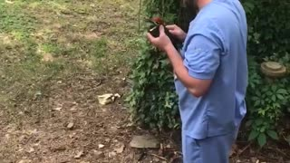Man Makes Friends with Woodpecker that Runs into Windows