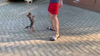Playing dog Mucia