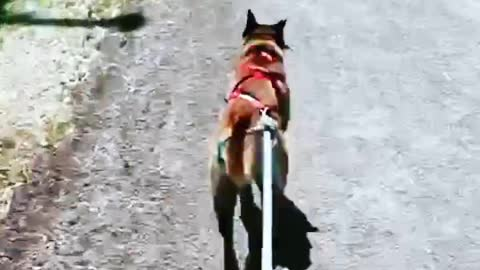 Dog Begs to go for a Run