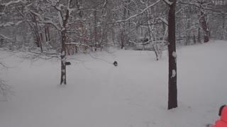 2013 Spring Break Blizzard
