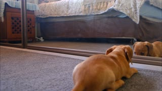 funny dog video cute puppy