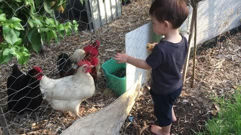 Chicken's best friend ever