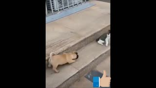 Adorable funny cats compilation videos