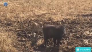 Eagle versus Snake and Leopard versus Monkey- Amazing Wild Animal Attacks 2021