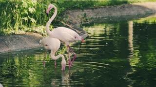 One Couple Flamingo