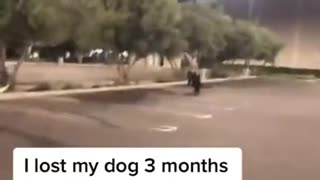 This Guy found his dog after 3 months