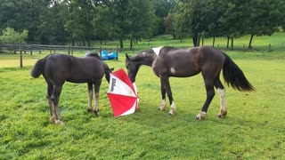 Curious funny horses playing with umbrella