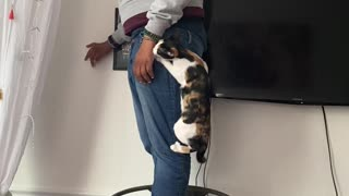 Kitty with separation anxiety