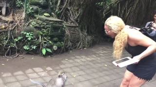 Cheeky Monkey Tries to Take a Peek