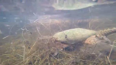 Big turtle underwater