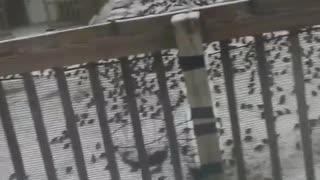Yard Overrun by Birds