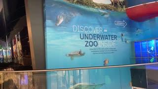 Discover underwater zoo in dubai mall