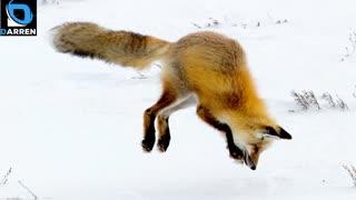 Fox Mirage Theme 4