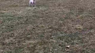 Pup running around the field