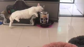 Cat Living its Best Life