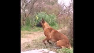 Very cute Pets and funny animals compilation