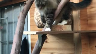 Catterlodge - Exercise Time