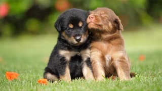 Cute dogs and puppies playing