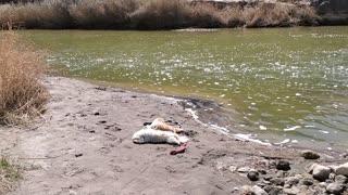 Rio Grande nap