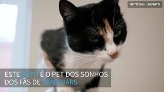 Gato Chewbacca! Este felino faz sons como o mítico personagens do Star Wars