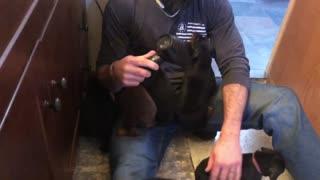Doberman puppies get a bath!