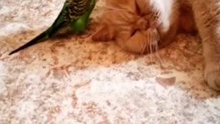 Очень милое видео, кот и птица.
