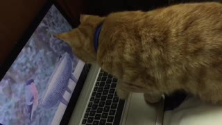 Funny cat video sweet