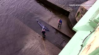 Whale becomes stranded in London's River Thames