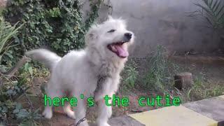 cutie dog ever found