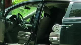 Bear Opens up Car Doors like a Boss