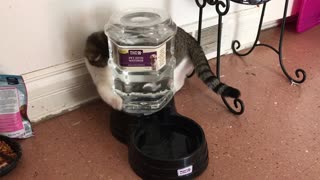 Cat playing with water