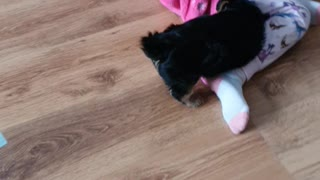 Happy puppy Toby