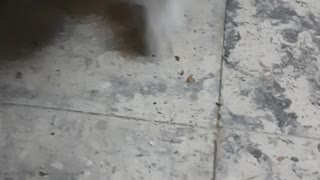 Maria Play With Cockroach