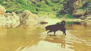 A Dog Is Playing With Water While Enjoying It