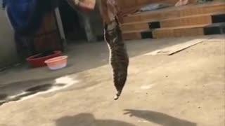 watch these funniest animals