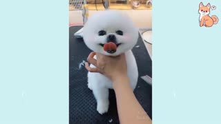 Dogs Compilation Cute Buddy