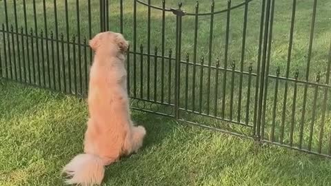 Friendship of dogs