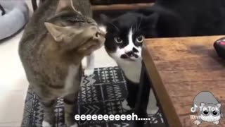 Funny Cats speaking the best English!
