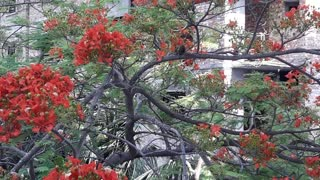 squirrel in flame tree