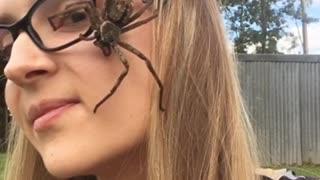 Giant Huntsman Spider Walks Across Woman's Face