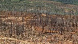 What is a forest fire?