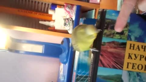 parrot Keshaa