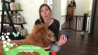 Teach your dog how to speak with this new tool