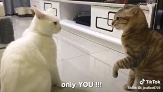 CATS TALK BETTER THAN HUMAN PART 2