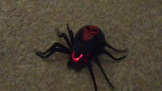 Scary mutant spider charges