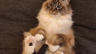 Super Cute Cat Loves Getting Vacuumed
