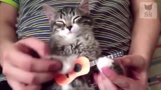 Funny metal cat sings...