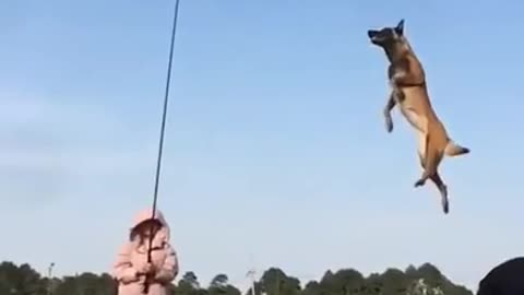 Flying dog, leash your dog to fly in the sky
